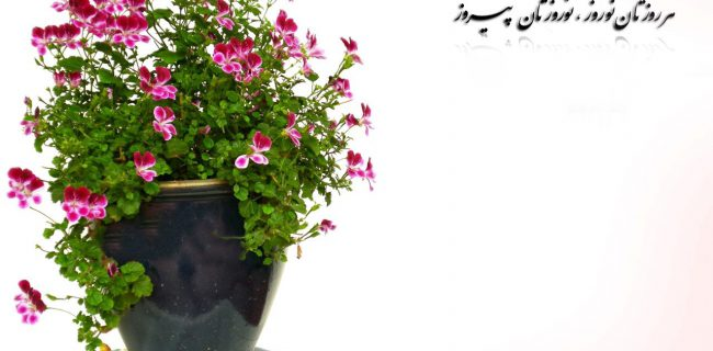 پیام تبریک عیدنوروز سال ۱۳۹۳